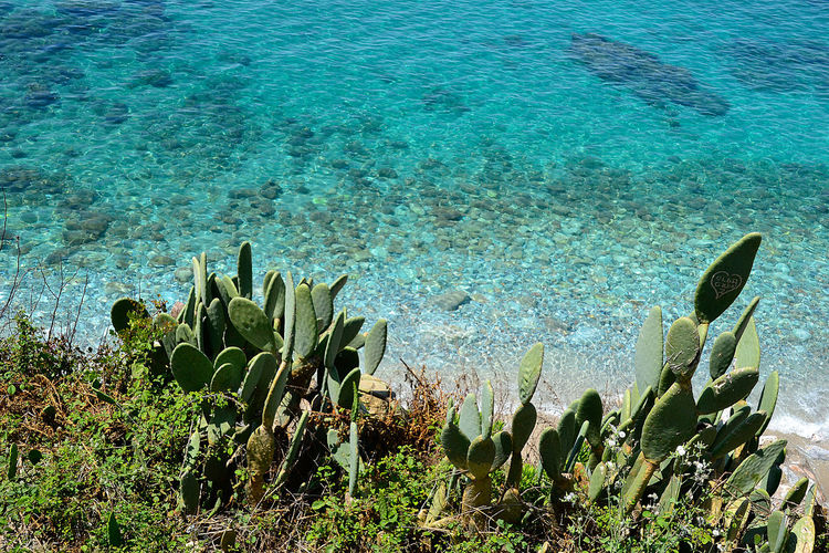 High angle view of succulent plant in sea