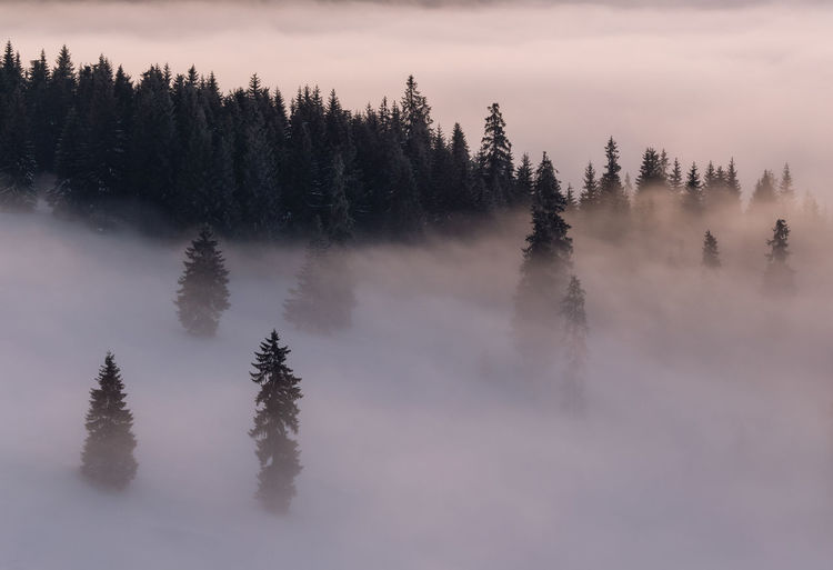 The beauty of winter on the snowy mountains, on a foggy morning in rodnei mountains - romania