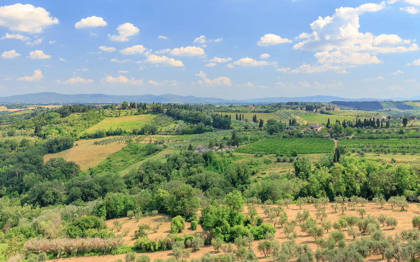 Dry summer day in Tuscany near San Gimignano Toskana Tuskany Beauty In Nature Cloud - Sky Environment Green Color Idyllic Italy Land Landscape Meadow Meadows And Fields Nature No People Non-urban Scene Outdoors Plant Rural Scene Scenics - Nature Siena Sky Summer Tranquil Scene Tranquility Tree