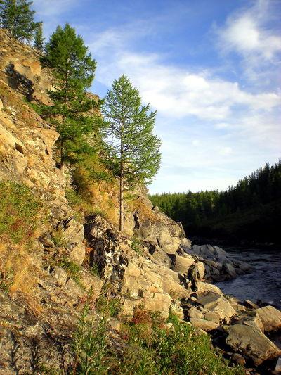 Plant Tree Rock