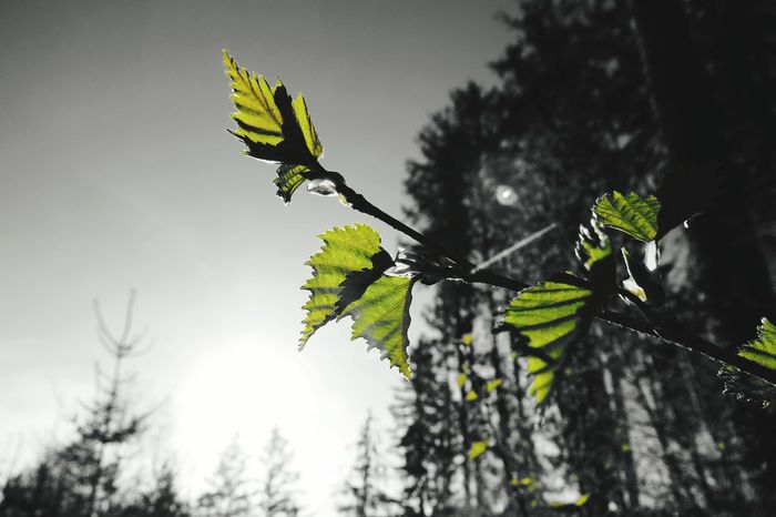 Early In The Morning Black And Green Nature Photography Forest Nature At Your Doorstep Natur Is Beautiful Leafs Leafs Photography Nature Is Art Nature Is Beautiful Springtime