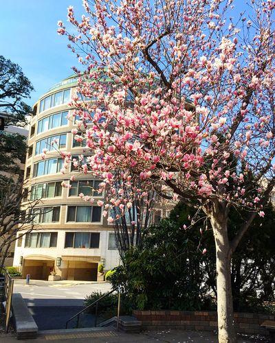 一番町 東京 Tokyo Tokyo,Japan Flower Building Exterior Freshness 3XSPUnity Relaxing Enjoying Life Beauty In Nature Hello World Tree