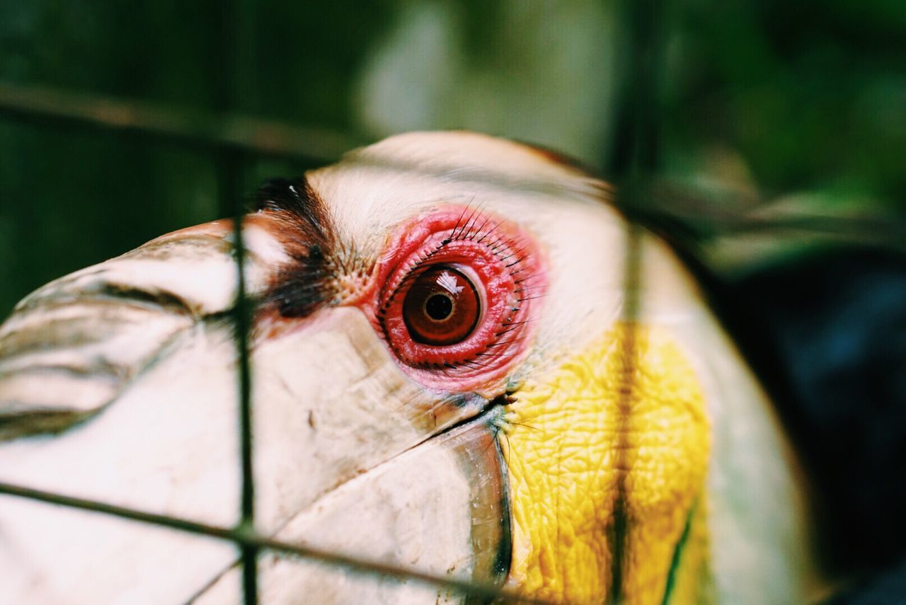 Close-Up Of Hornbill In Cage At Zoo