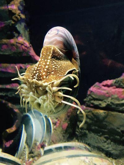 Aquaria Aquaria Klcc Aquarium Photography