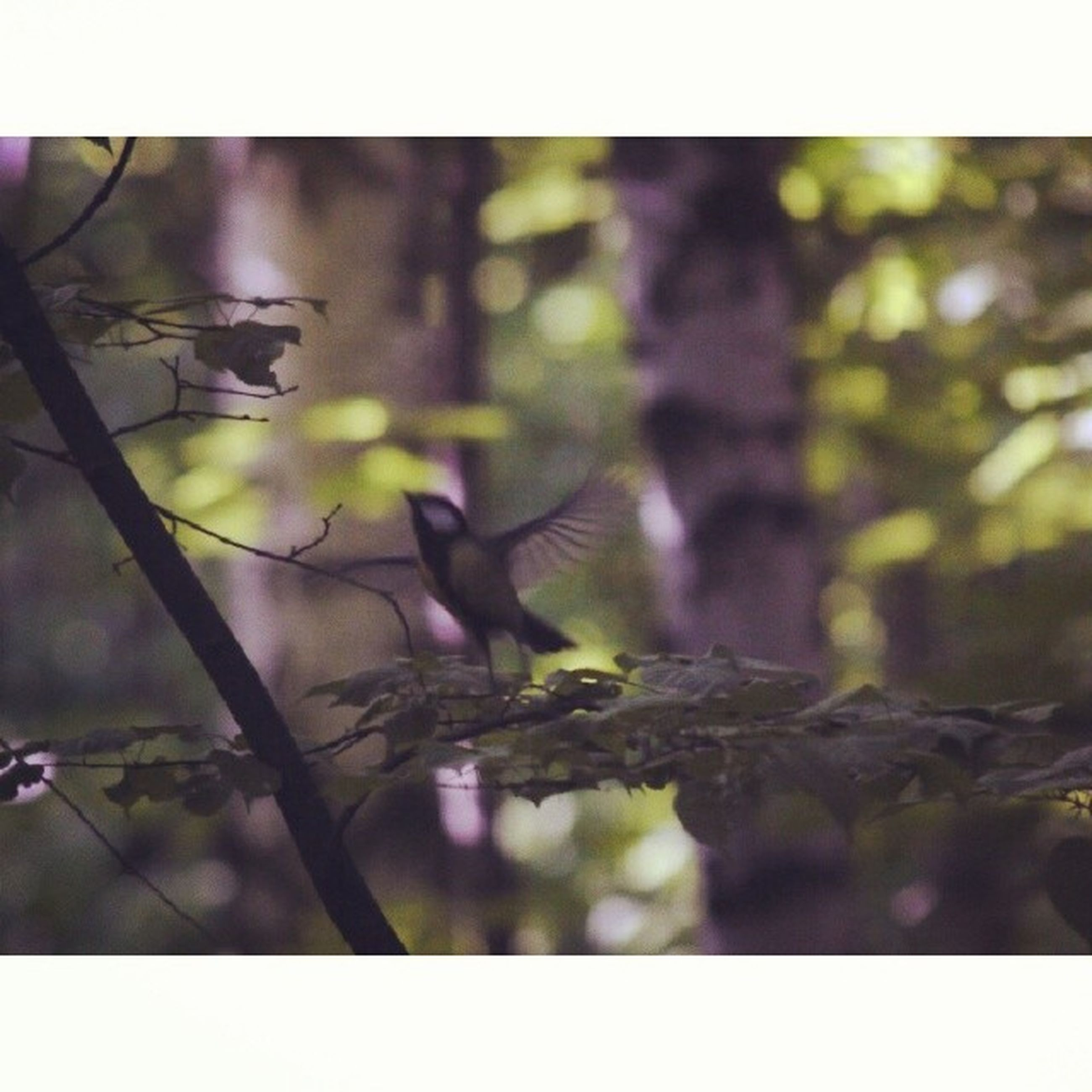 animal themes, animals in the wild, wildlife, transfer print, one animal, auto post production filter, branch, bird, nature, focus on foreground, selective focus, close-up, plant, perching, tree, leaf, growth, forest, day, outdoors