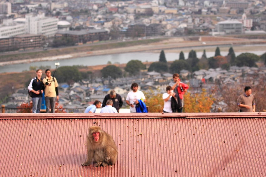 The Tourist EyeEm Best Shots 嵐山モンキーパーク Arashiyama Monkey
