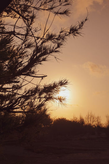 yellow dusk in