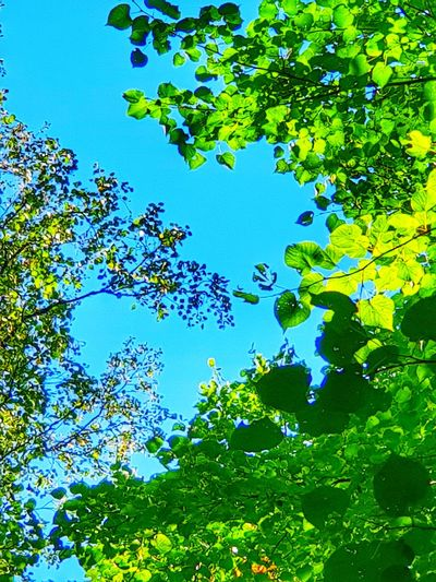 Forestwalk Beauty In Nature Naturelovers Light And Shadow Beautiful Nature Relaxing Tree Water Blue Leaf Multi Colored Backgrounds Branch Sky Close-up Green Color Forest Growing