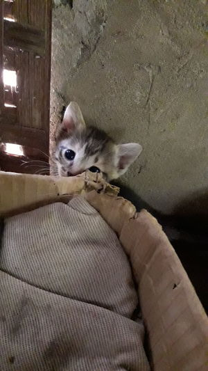 Kitten Hiding Out Cat♡ Love Without Boundaries
