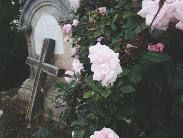 Paseo por el cementerio Hanging Out Taking Photos Hello World Check This Out Enjoying Life Colombia Colombia ♥  Tunja Graveyard Rose🌹 Roses Flower Flowers Cross Peace Trip Eyeemawards16