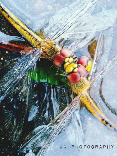 Hud Hud Cyclone Effect Truelove Nature Dragonfly