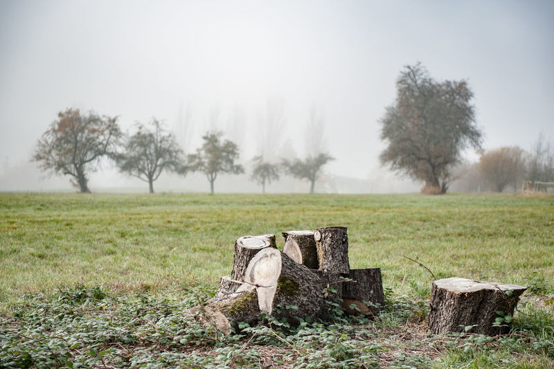 Tree Stumps On Field In Germany