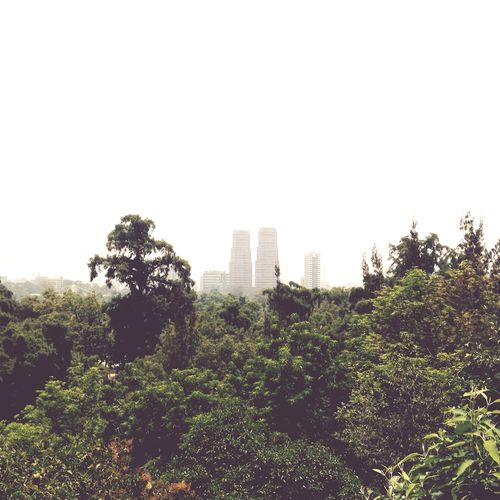 City and jungle