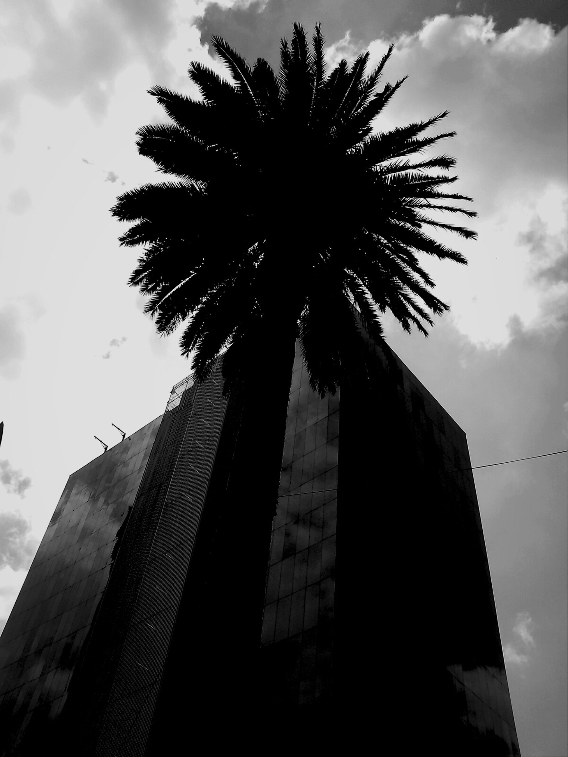 low angle view, palm tree, sky, tree, architecture, built structure, tall - high, building exterior, cloud - sky, silhouette, tree trunk, growth, cloud, tall, outdoors, day, cloudy, nature, branch, no people