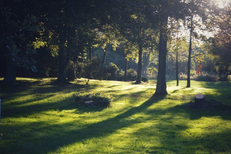 Hazy. Nature Tree Outdoors Sunny Day Nature Portraits Capture Tomorrow