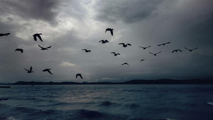 Flock of birds flying over cloudy sky