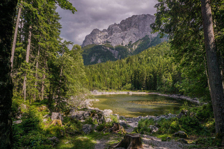 Frillensee Zugspitze Alps Alpen Tree Nature No People Mountain Outdoors Beauty In Nature Growth Landscape Scenics Day Sky Freshness