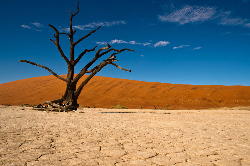 Africa Afrika Desert Dry Mittag Namibia Old Tree Red Dunes Red Sand Roter Sand Sand Single Tree Sossusvlei Sossusvlei Desert Sossusvlei Desert - Namibia Sunrise Texture Tree Trockenheit Wüste