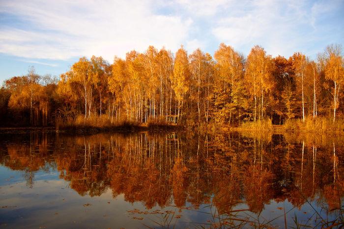 Waldsee Bäume Spiegelungen Wasser Reflexion Nature Natur Landschaft Herbst Herbststimmung