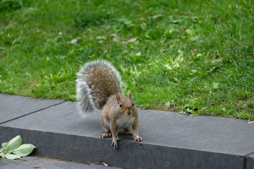 Animal Animal Themes Animal Wildlife Animals In The Wild City Day Domestic Domestic Animals Mammal Nature No People One Animal Outdoors Vertebrate