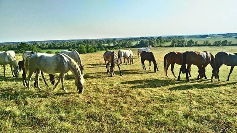 Wildhorses Horses Lipicaner Ivandvor Djakovo Croatia Croatiafulloflife HDR Hdrphotography Vibeshot The Great Outdoors - 2016 EyeEm Awards