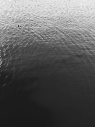 Swimming Water Water Surface Blackandwhite Black And White Gradient Textures and Surfaces Textured  Backgrounds Duck Water Bird Swimming Animal Wild Animal Freshwater Bird Duckling Young Bird