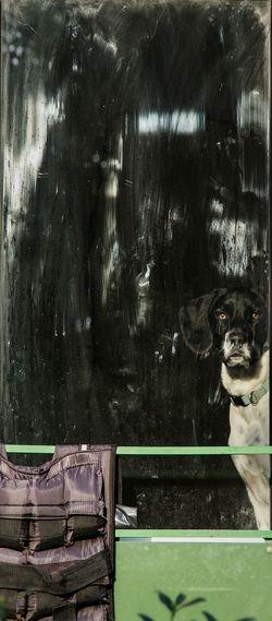 Longing dog. Pet Animals Dog Look Eye4photography  Photooftheday Storytelling Home Window Reflection Longing Sun Copenhagen Longing To Be Outside Play Sweet Photo Photographer Photos Around You Curiosity