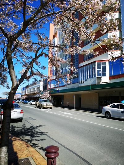 Spring is here. City Tree Road Land Vehicle Car Street Architecture Sky Building Exterior Built Structure