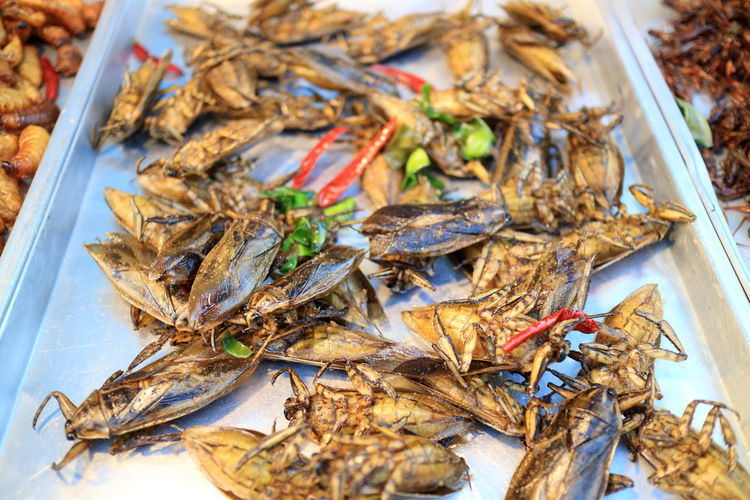 High Angle View Of Fried Cockroaches In Tray At Market Stall