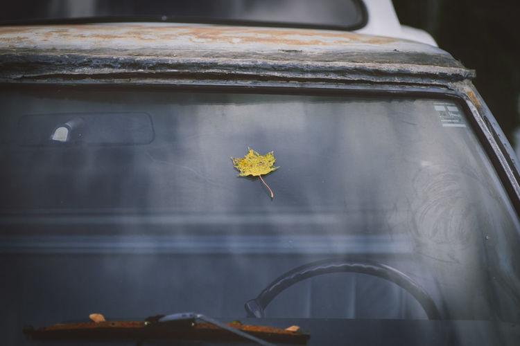 Falling Leaf on