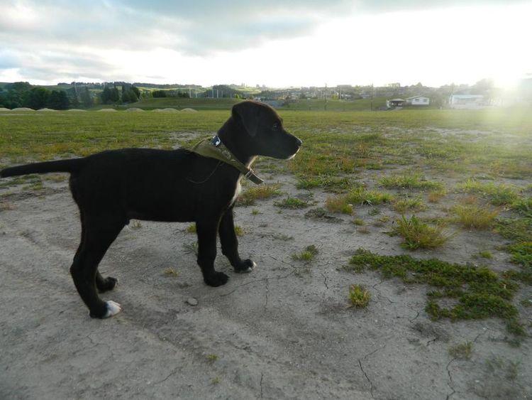 His name is Fin x Animal IrenesPics No Fliter  Walks