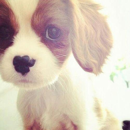 Dog Love We Heart It