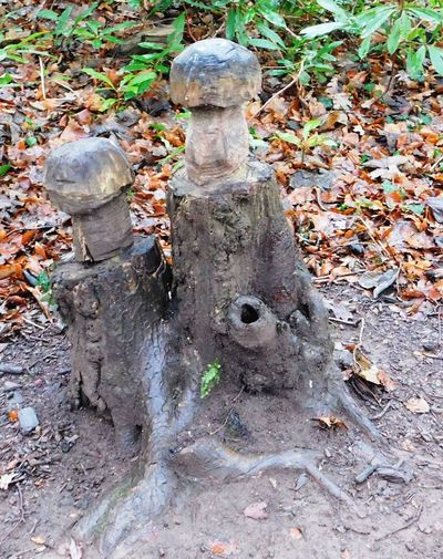 The magical fairy world found deep within Fullarton Woods, Troon, South Ayrshire, Scotland. Fairies Magical Mushrooms Scotland Carving In Wood Close-up Day Fullarton Woods Mysterious Mystical Nature No People Outdoors South Ayrshire Tree Tree Trunk Troon Woodlands