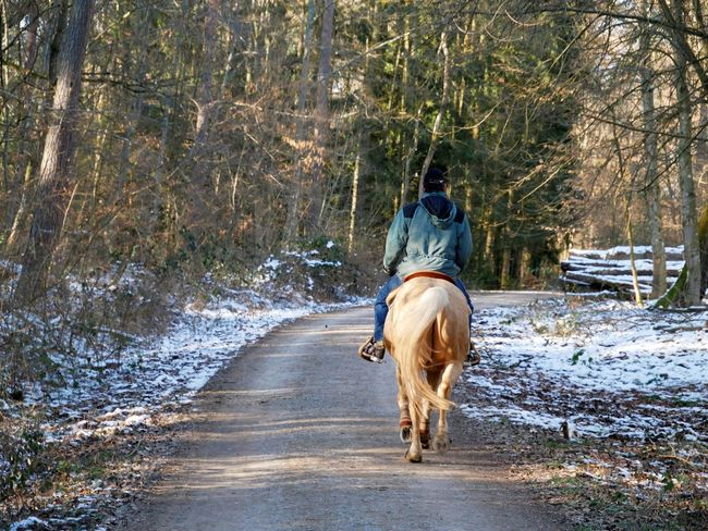 Horse. Cold Temperature Day Dog Domestic Animals Forest Full Length Horse Horseback Riding Mammal Men Motion Nature One Animal One Man Only One Person Outdoors People Pets Rear View Riding Road Running Snow Tree Winter Press For Progress Colour Your Horizn EyeEmNewHere