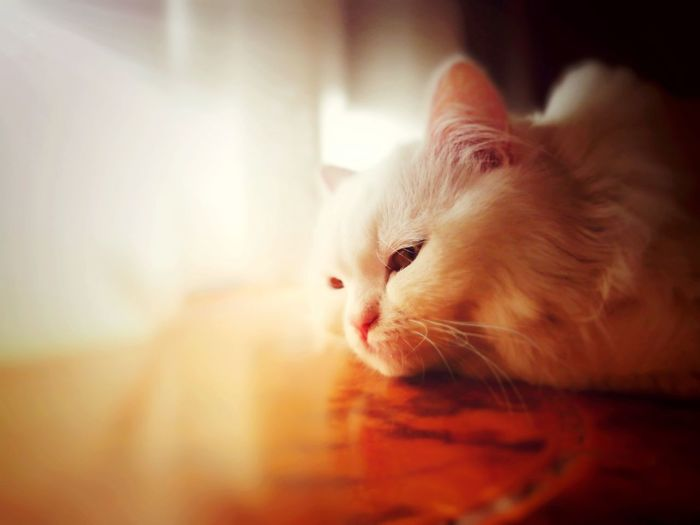 My Cat ❤ Cat Cat Lovers Cat Lovers 🐱💞 Cats Of EyeEm Cat Eyes Cute Pets Cateyes Cat Face Cat Photography Pets Photography My Cat♥ Close-up Morning Light Beatiful Cat Lovely Cat 😻 Totssy 😍