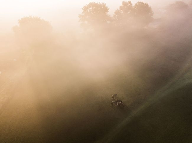 Sunbeams Sunbeam Horselove Field And Sky Drone View Drone Shot Dronephotography Autumn Melancholy Moody Photography Moody Weather Sunrise_Collection Rural Scene Agriculture Nature Field Horse Life Summer Morning Mist Majestic Nature Misty Morning Horse Horses