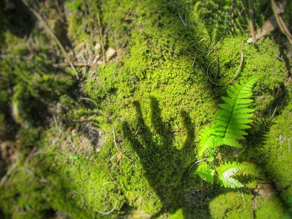 Caressing nature Beauty In Nature Close-up Day Ecology Focus On Foreground Forest Grass Green Green Color Growth Hand Shadow Leaf Lumicar Lush Foliage Moss Natural Pattern Nature Outdoors Plant Scenics Selective Focus Tranquil Scene Tranquility