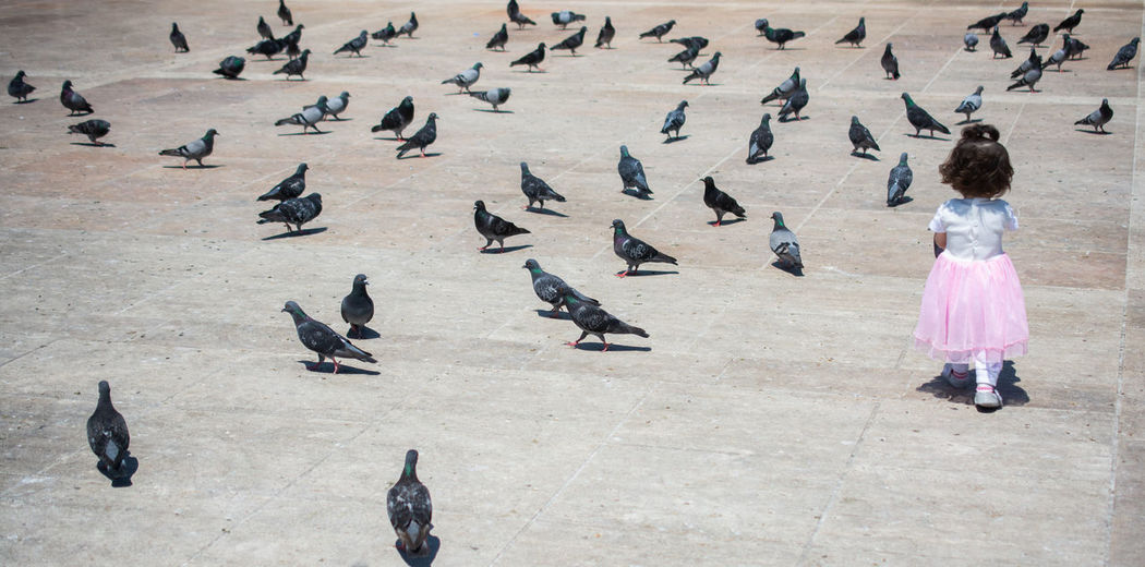 High angle view of pigeons perching