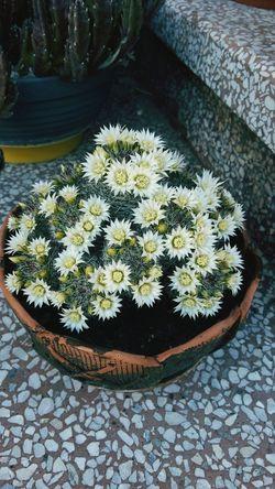 Cactus Flower I Love Cactus I ♥ Cactus Flower