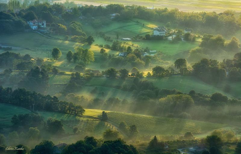 Fog Green Color