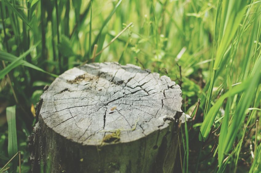 Tree Stump Grass Day Outdoors Tree Ring Nature