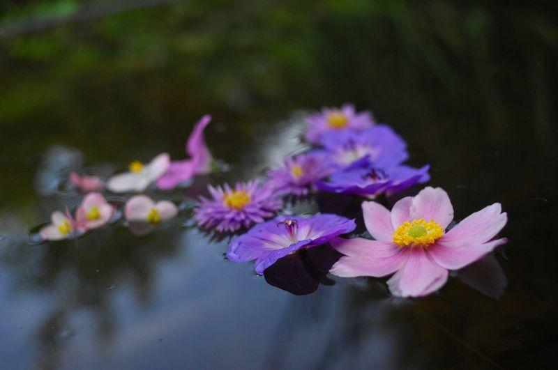 Blüten Auf