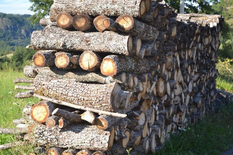 Wood Logs Ready For Winter