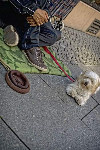 Bettler Dog Domestic Animals Low Section Loyalty Mammal One Animal Pampered Pets Person Pets Selective Focus Stray Animal Street