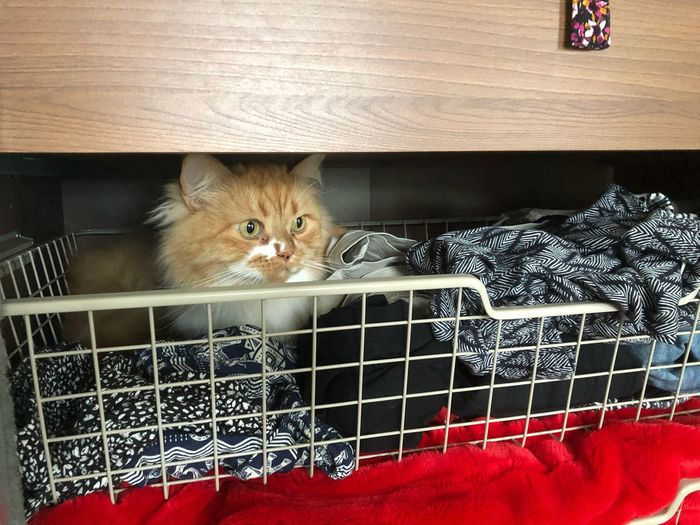 Portrait of kitten in cage at home