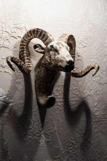 High angle view of animal representation on wall