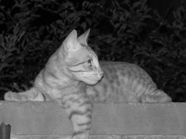 Monochrome Cat♡ Like For Like Jodhpur India