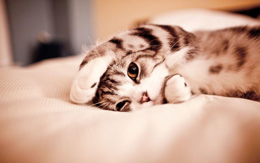 Cat Relaxing Cute Animal