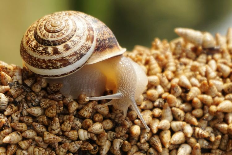 Close-up of snail on shells