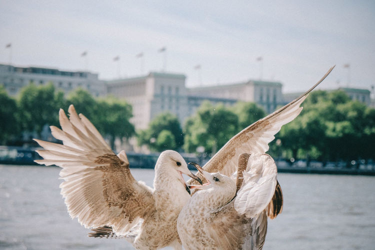 Seagull Animal Wing Flying Nature Spread Wings Animal Wildlife Animals In The Wild Bird Animal Themes Animal First Eyeem Photo Vertebrate Group Of Animals Focus On Foreground Two Animals Architecture Water Built Structure Day No People Building Exterior Close-up Outdoors My Best Photo